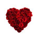 iStock_heart_of_rosesxSmall